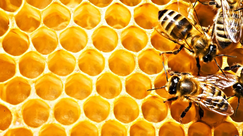 картинки с мёдом и пчёлами