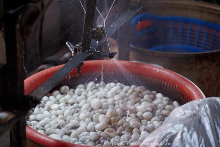 Выращивание тутового шелкопряда в россии 63