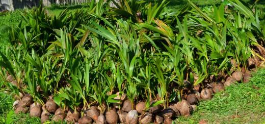 Фабрика по производству кокосового масла