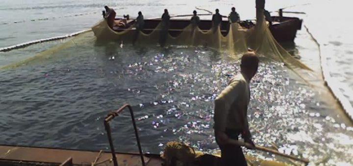 рыбалка ставным неводом видео